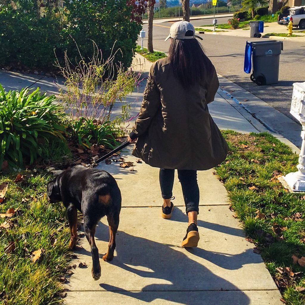 Ariana's dog day care