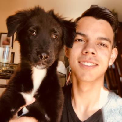 Alex's dog boarding