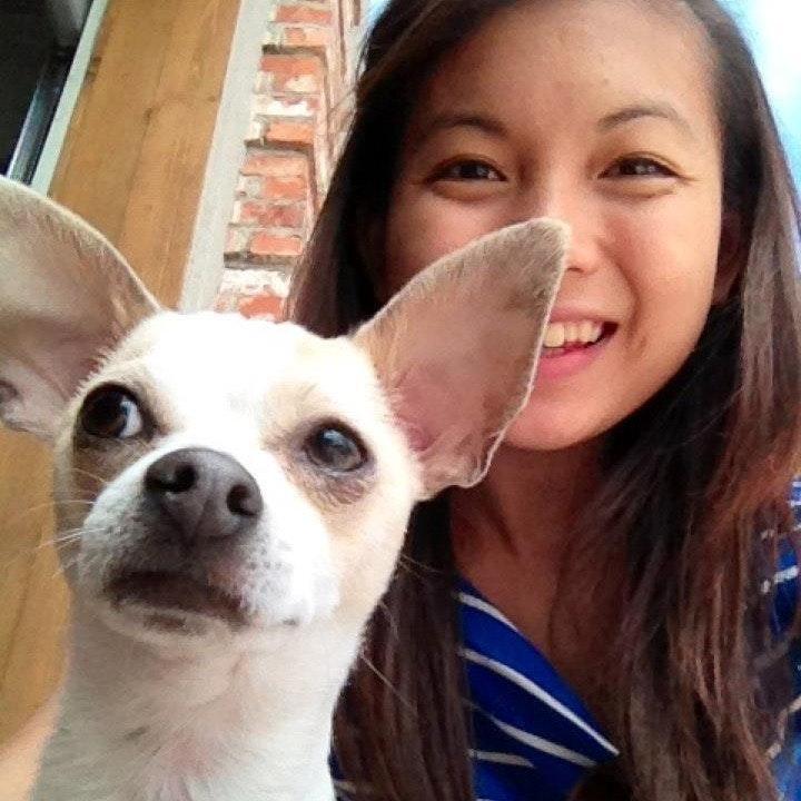 Jaz's dog day care