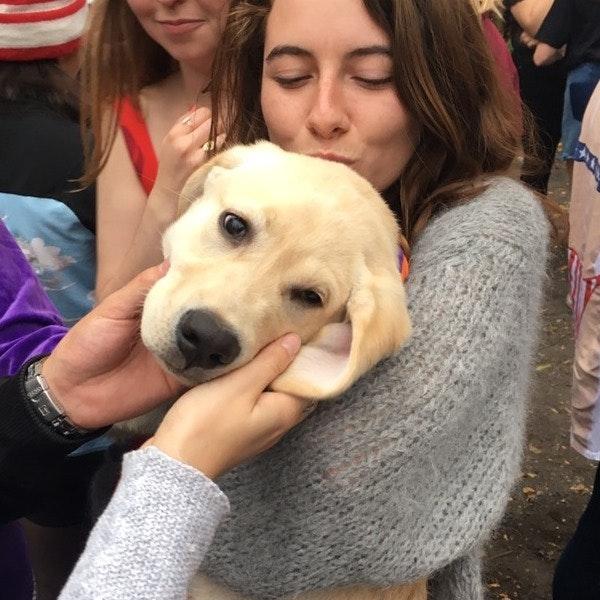 Macauley's dog day care