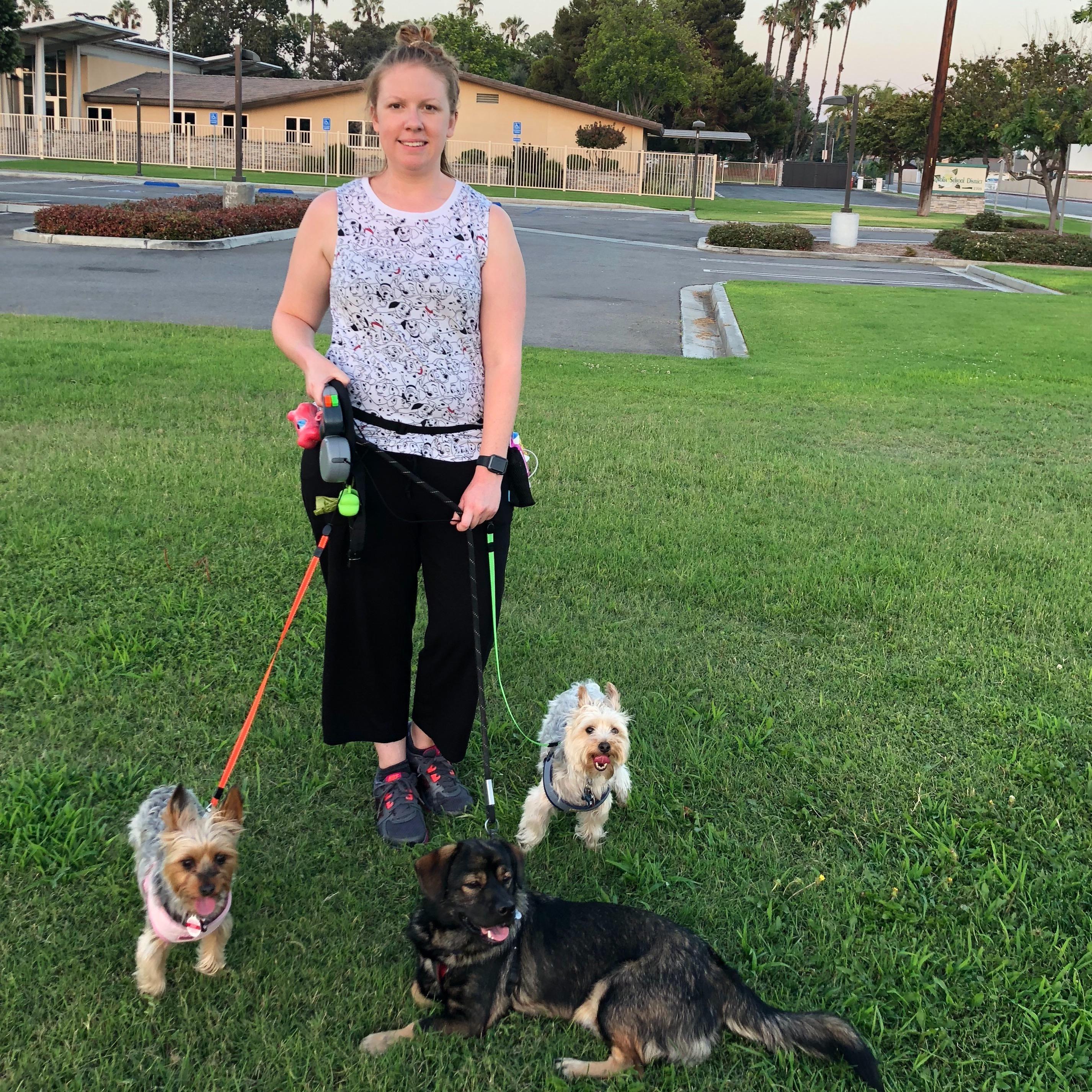 Bridget's dog day care