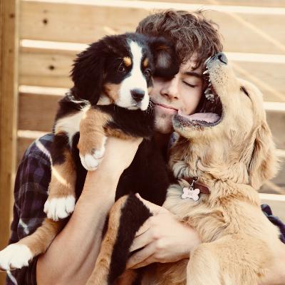 Samuel's dog day care