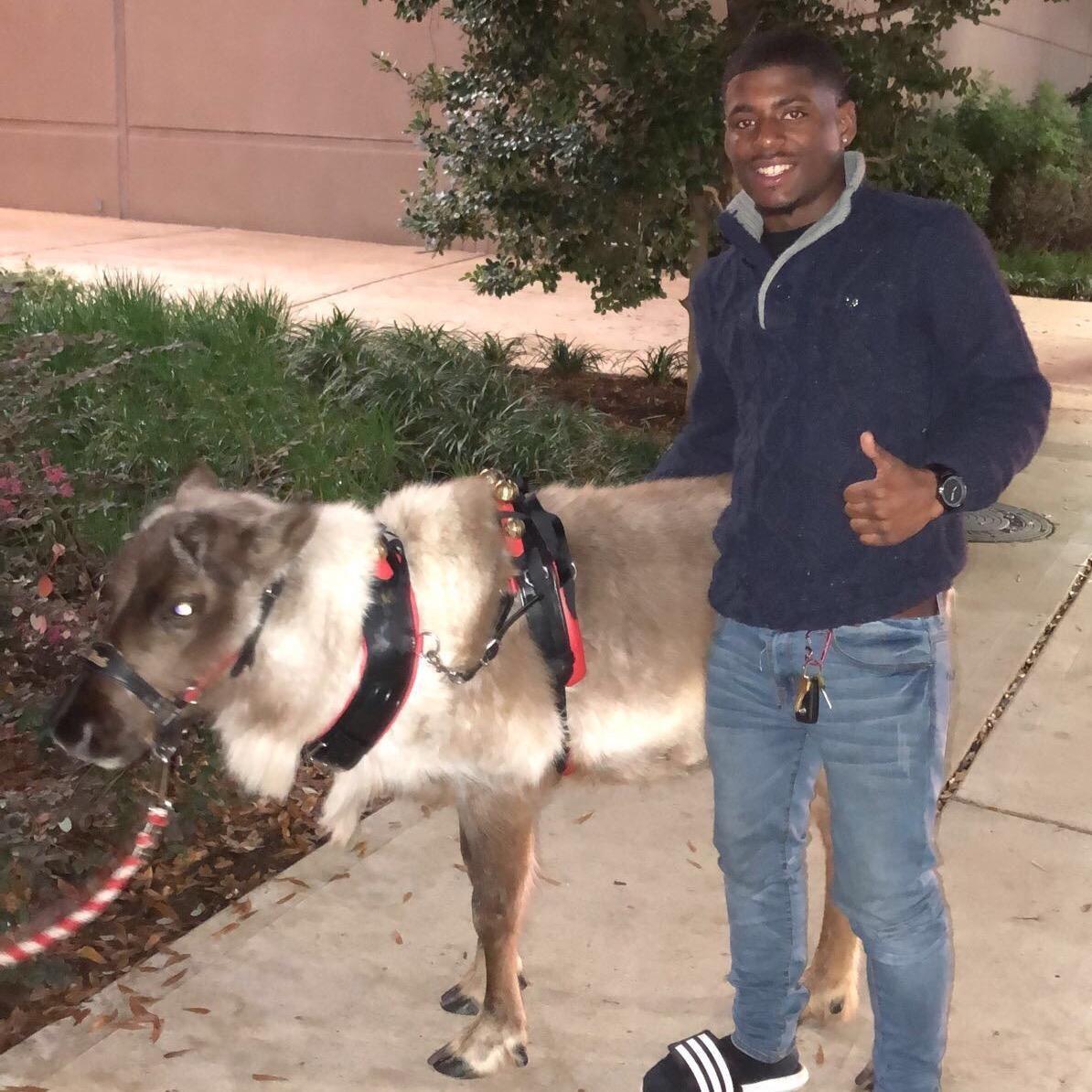 Maurice's dog boarding