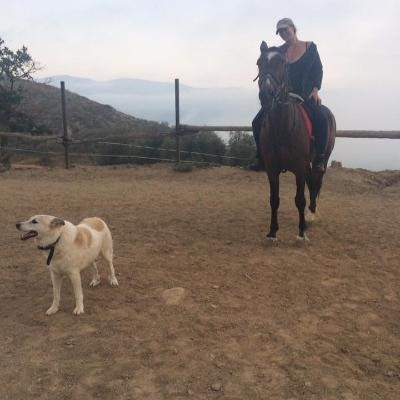 Ingrid's dog boarding