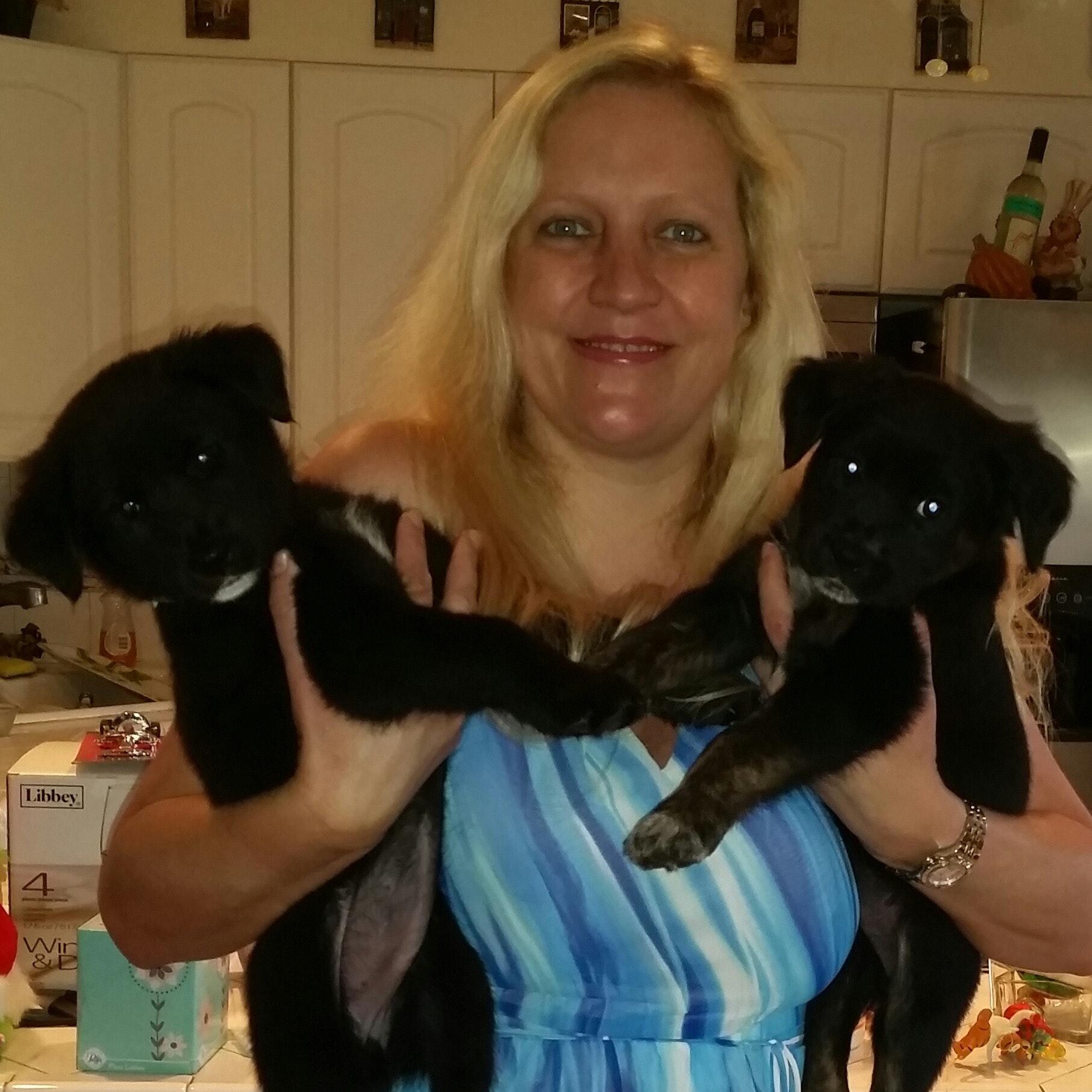 Romana's dog day care