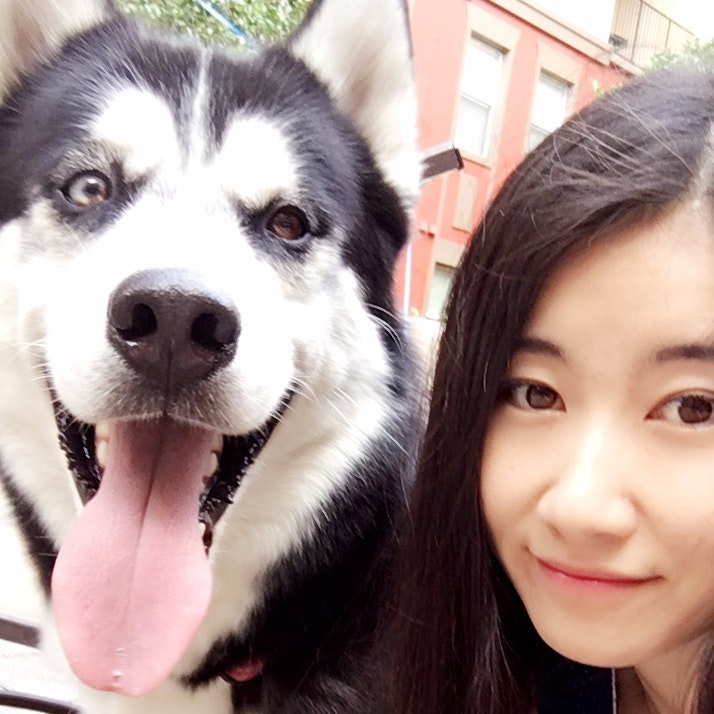Ada's dog day care