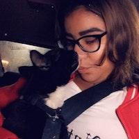 Amba's dog day care