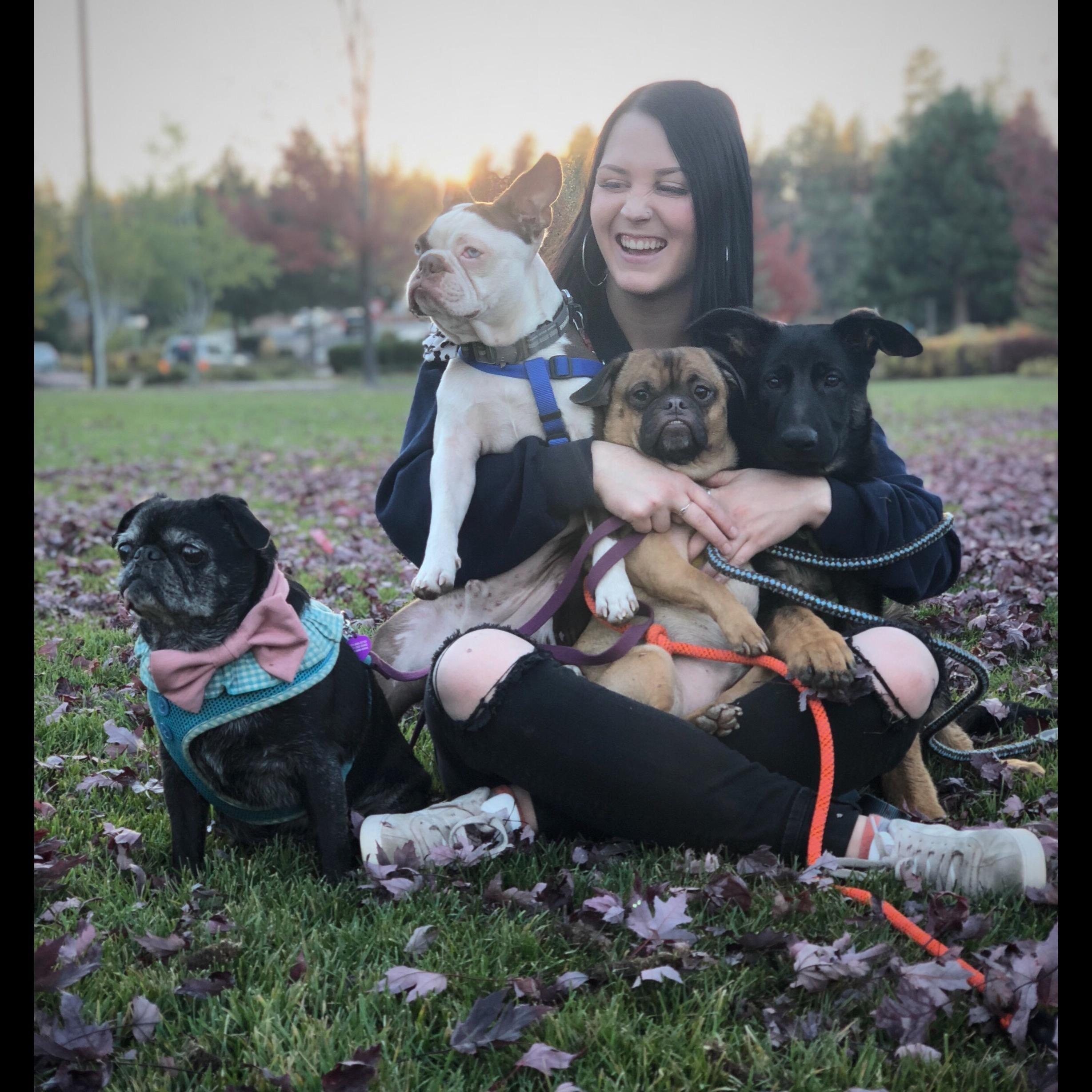 Jaimie's dog day care