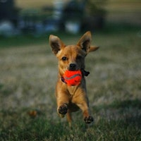 dog walker Hailey