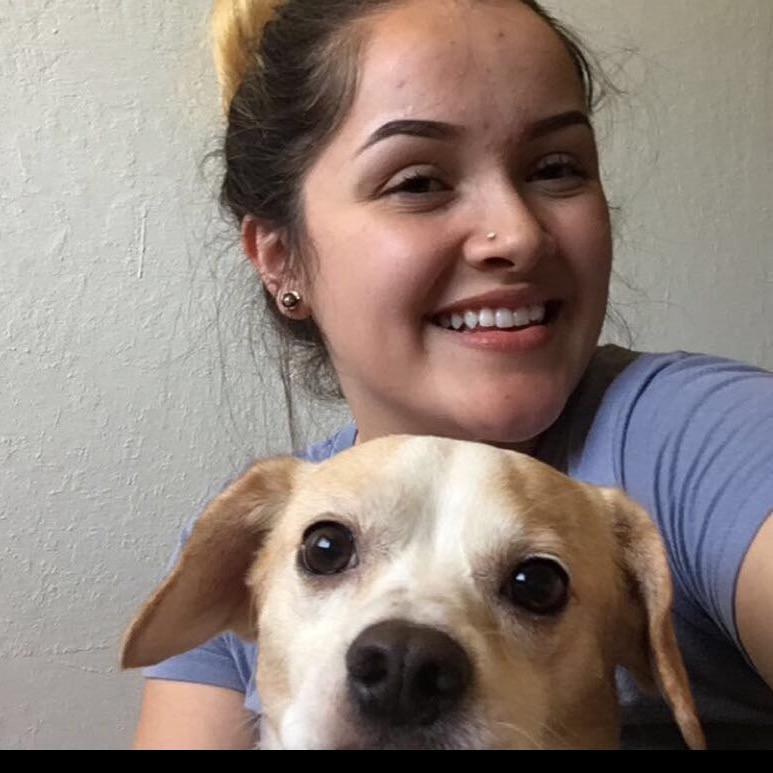 Annai's dog day care