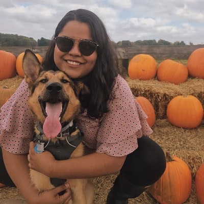Vivi's dog day care