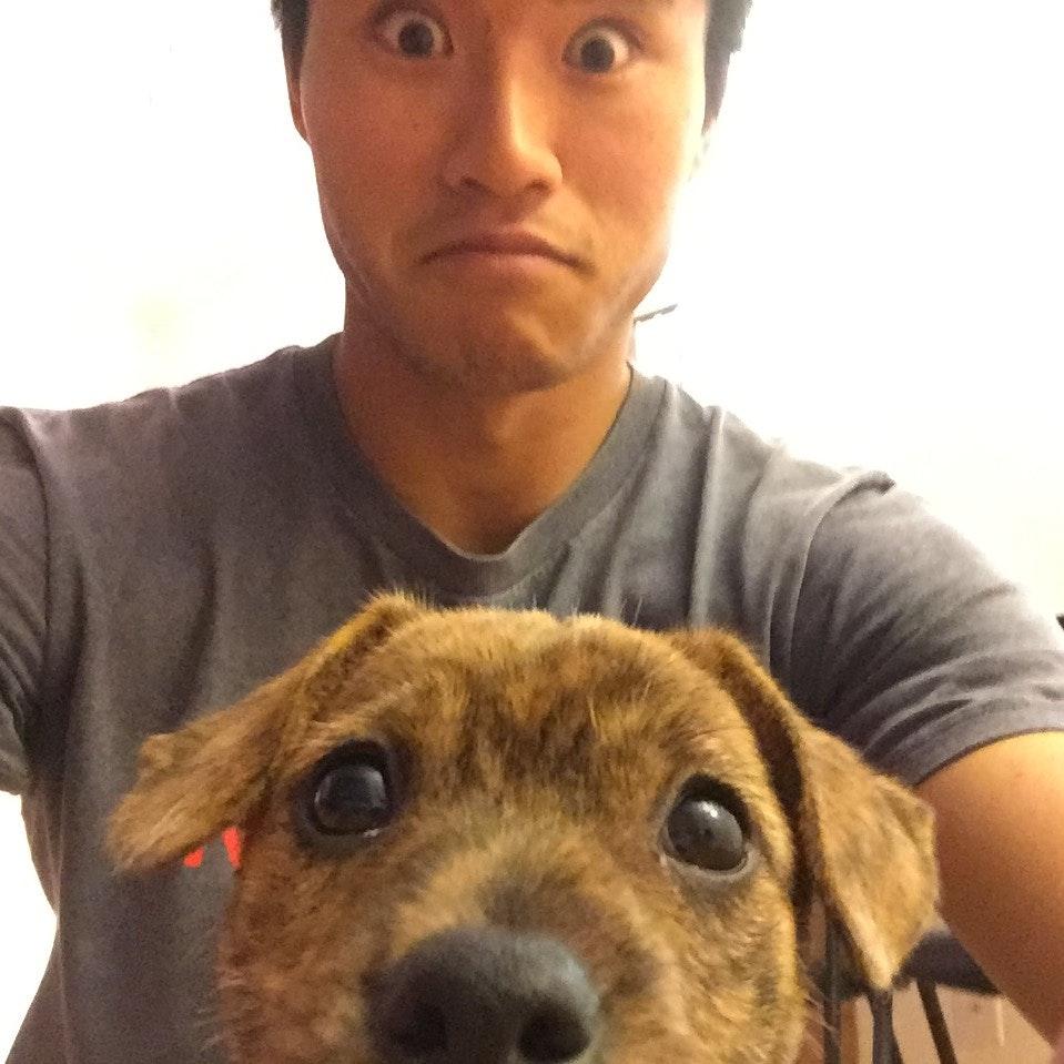 Ryan's dog day care