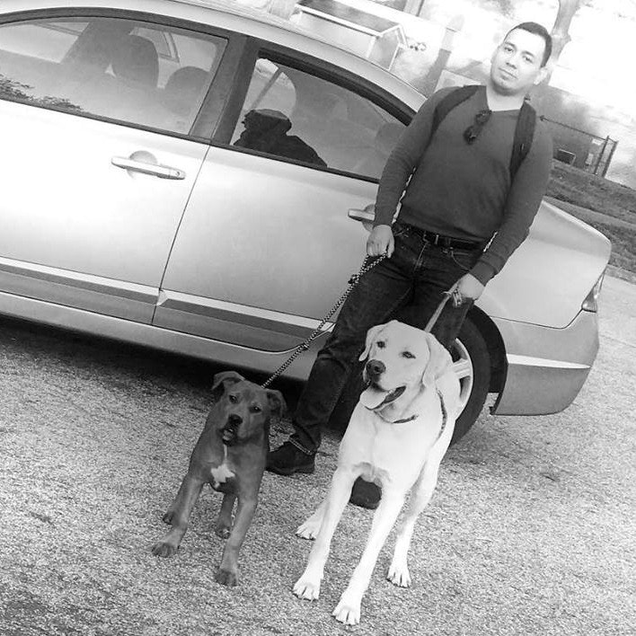 Alan's dog day care