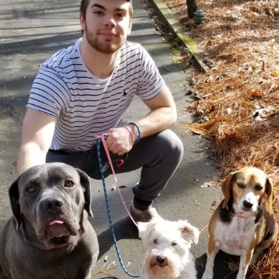Conor's dog day care
