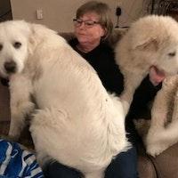 Terri's dog boarding