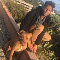 Dameyon's dog day care