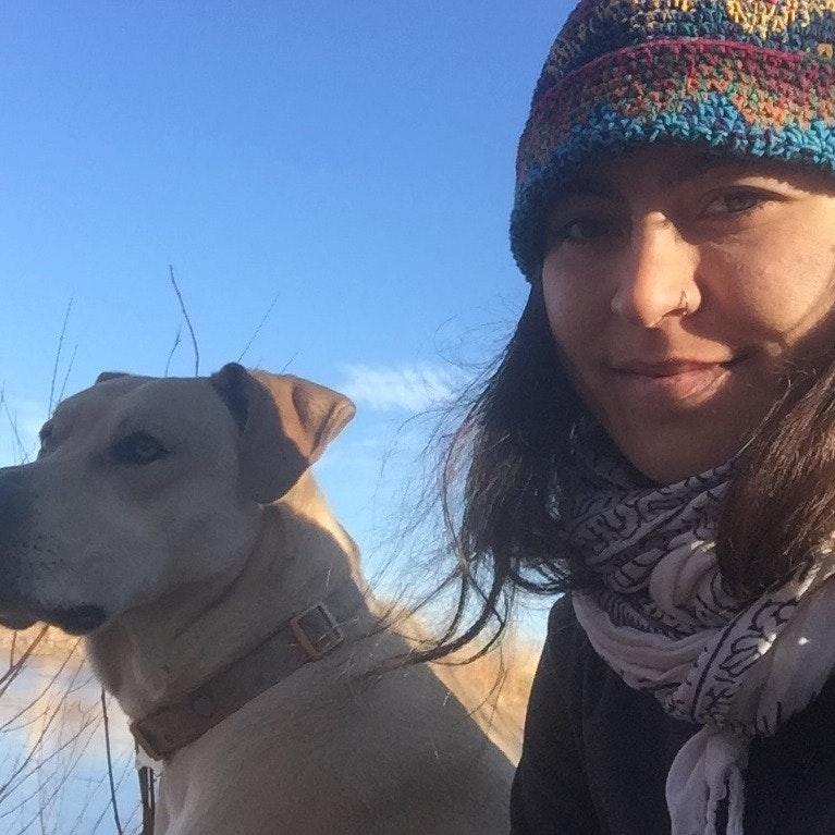 Zhenya's dog day care