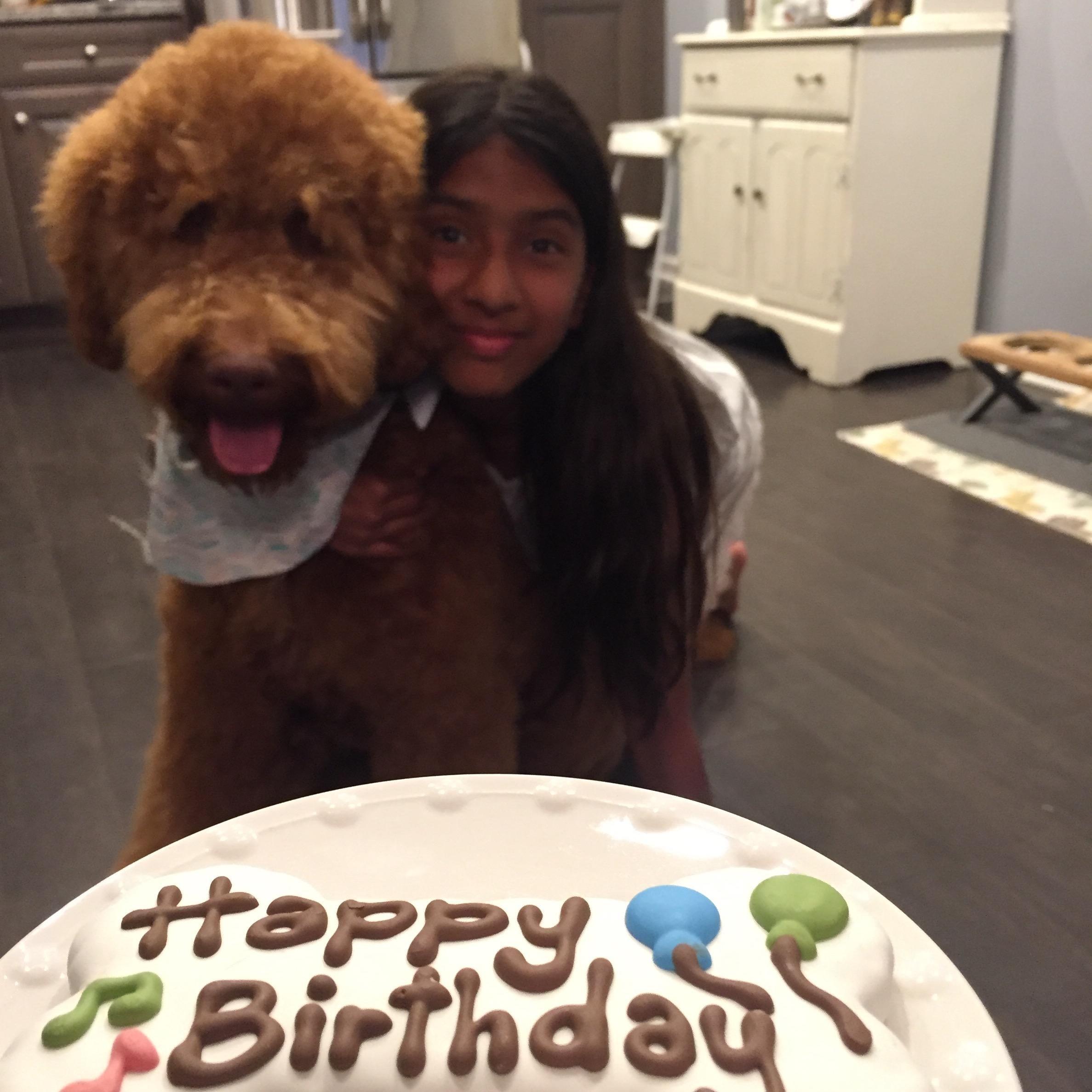 Zueen's dog day care