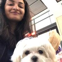 Shruti's dog boarding