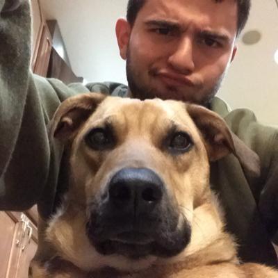 Steven's dog day care