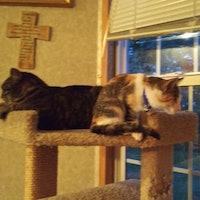 house sitter Cherokee