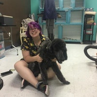 Brooke's dog boarding