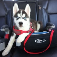 Chelcie's dog boarding