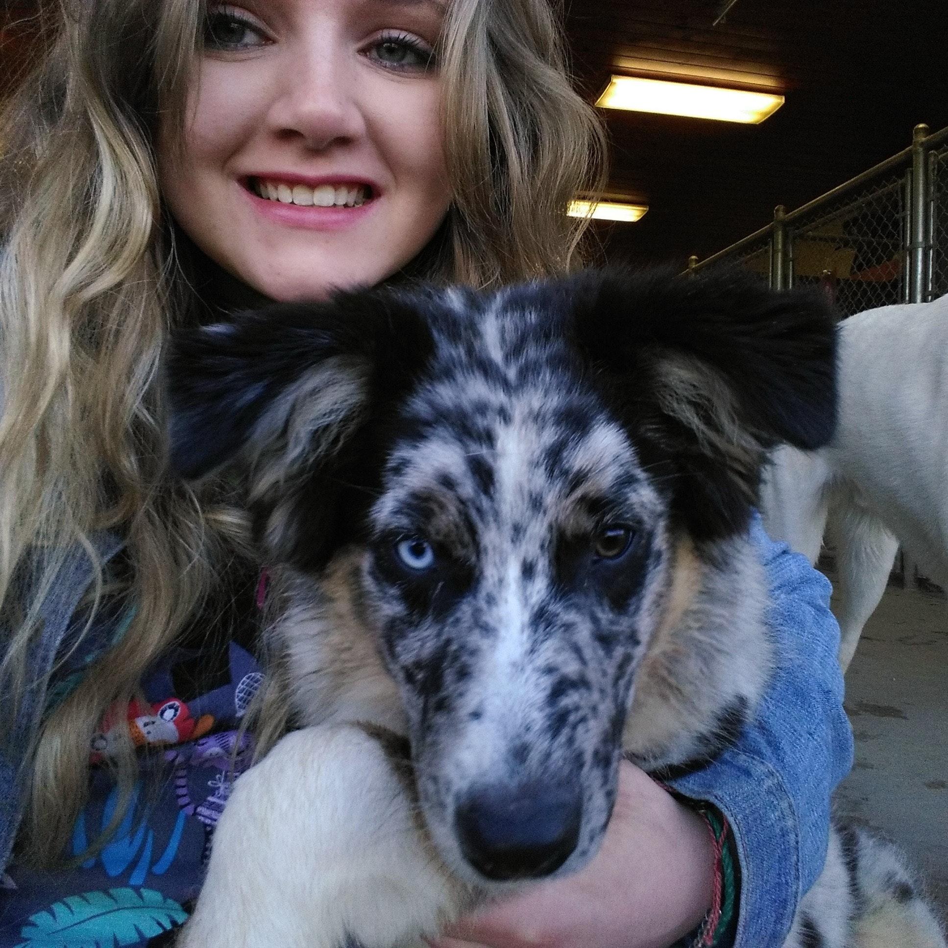 Rachael's dog day care