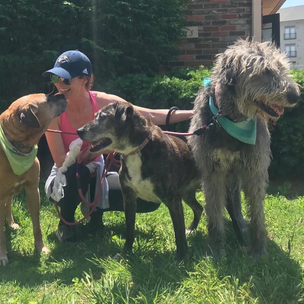 Ellen's dog day care
