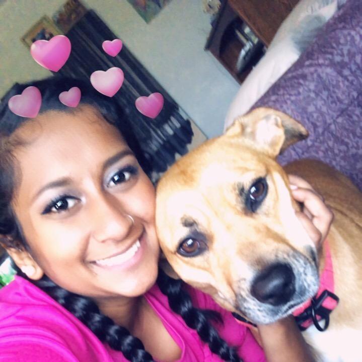 Saani's dog day care