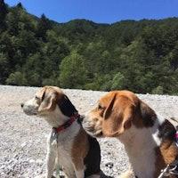Fiorenza's dog boarding