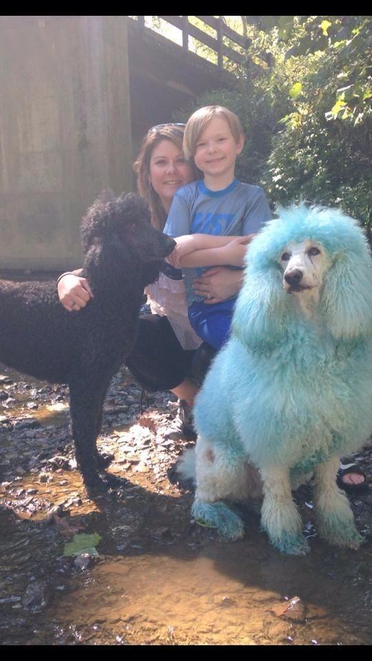Kellie's dog day care