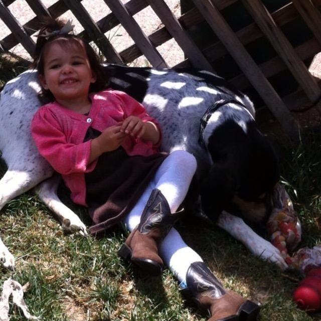 Loren's dog day care