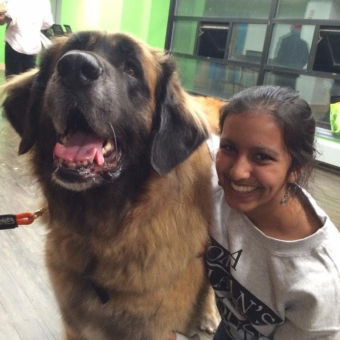 Rati's dog boarding