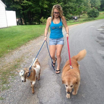 Marrah's dog boarding