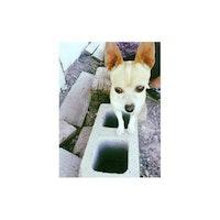 Zelena's dog boarding