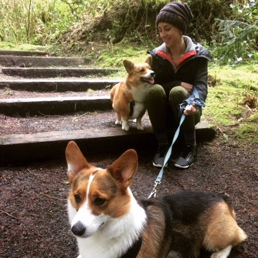 Bridgett's dog boarding