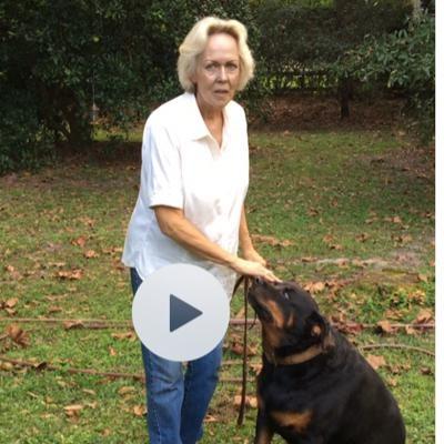 Barbara's dog boarding