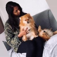 Sarah's dog day care