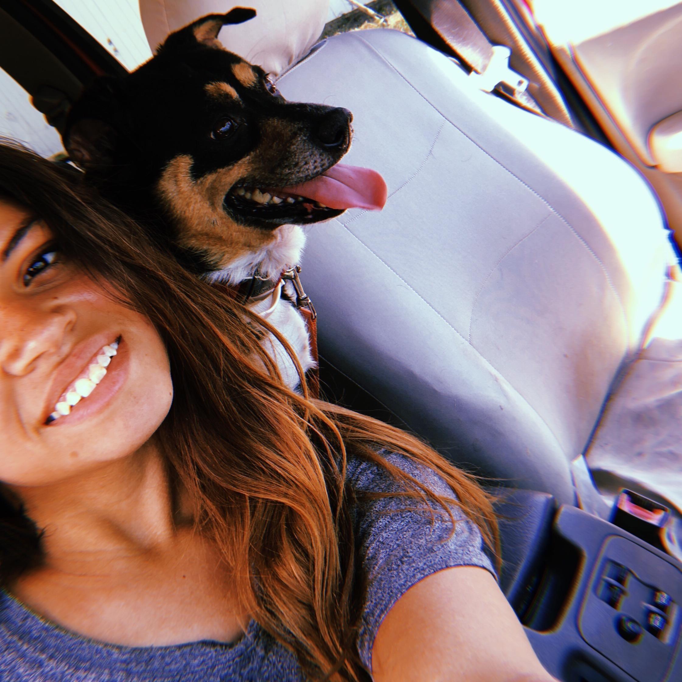 Dariana's dog day care