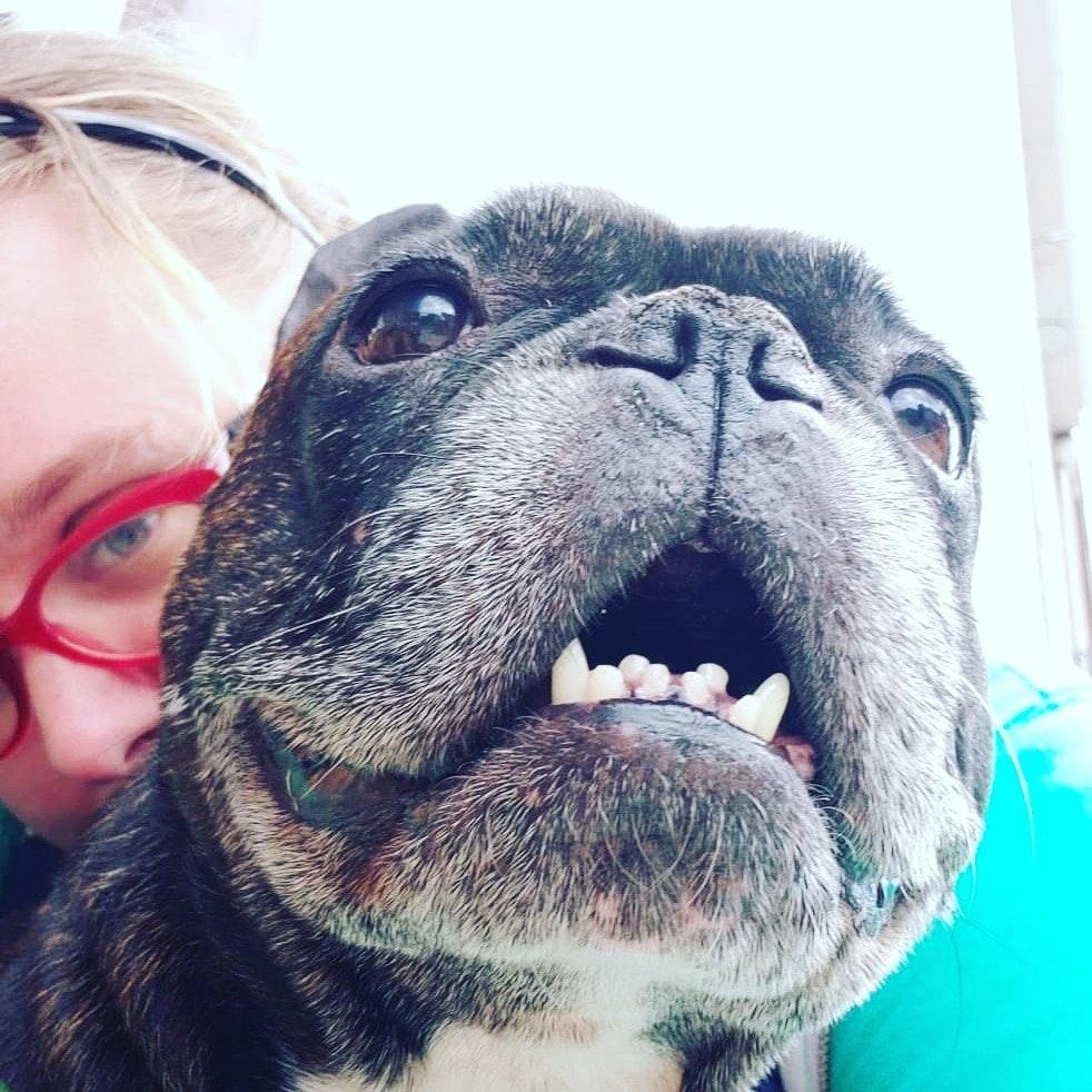 Allegra's dog day care