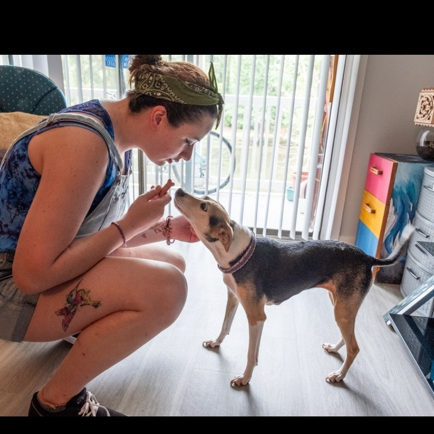 Katy's dog day care