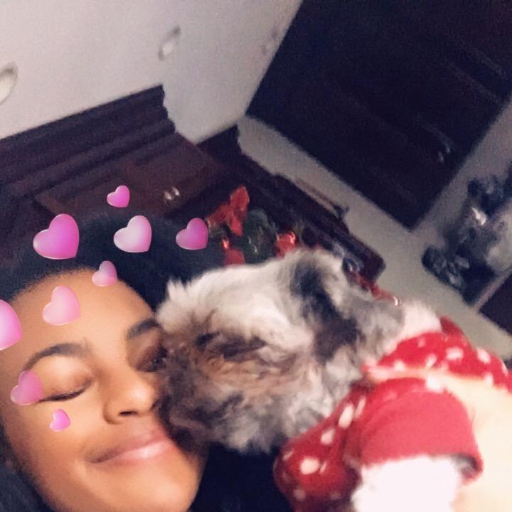 Taina's dog day care