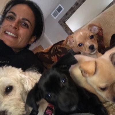 Pariva's dog day care