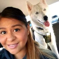 Tasha's dog day care