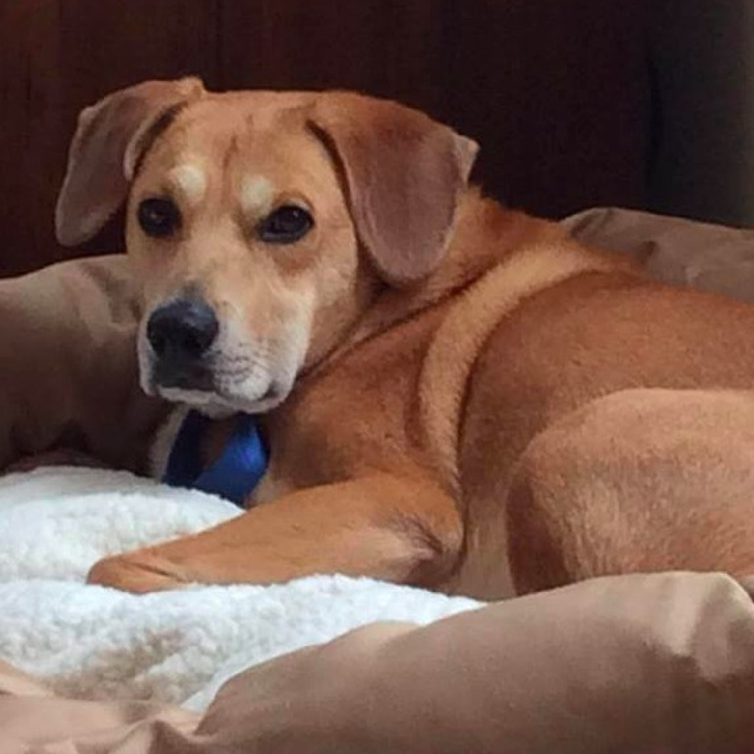 Arlington's Best Dog Boarding Sitters & Dog Walkers | Rover com