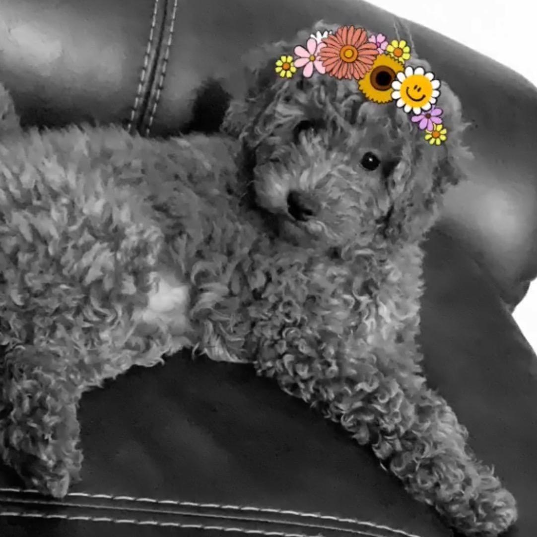Lyssa's dog day care