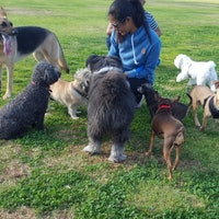Candice's dog day care