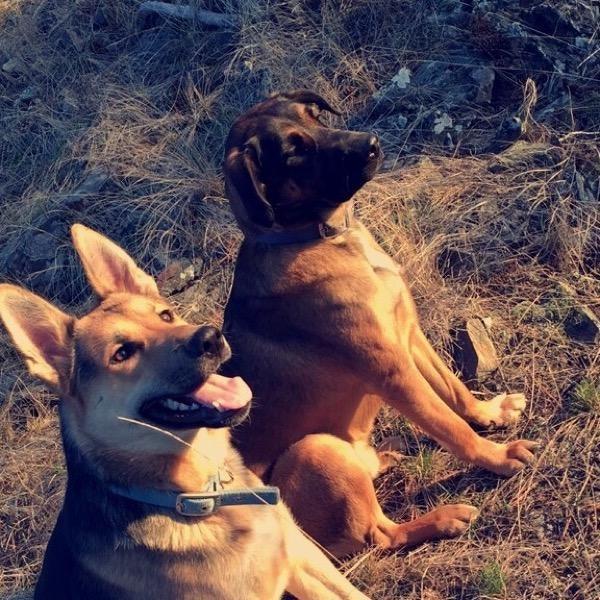 Cheyenne's dog boarding
