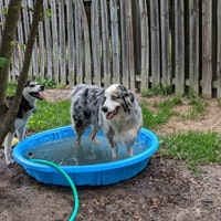 Jenny's dog boarding